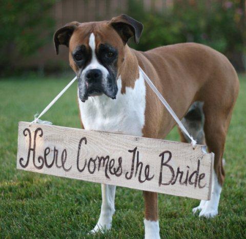 cachorro no casamento